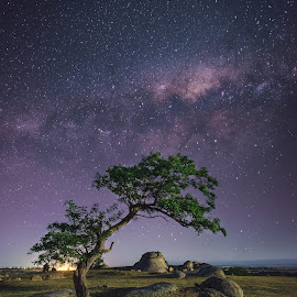 Dogs rocks by Christopher Pearce - Landscapes Starscapes ( milkyway, tree, stars )