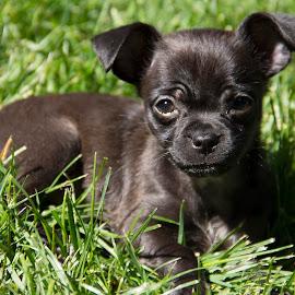 (8) 2013-06-11 by Richelle Wyatt - Animals - Dogs Puppies ( richelle@richelleleighphotography.com, 2013, june, 2013-06-11, june 2013, www.richelleleighphotography.com, richelle leigh photography )