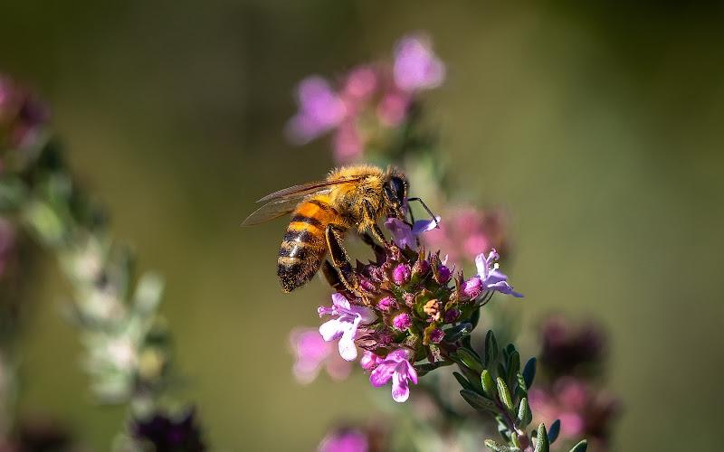 Polline primaverile di renatoxxx