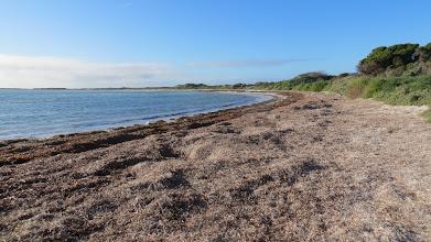 Photo: Seaweed Beach
