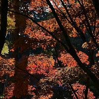 I colori dell'autunno di