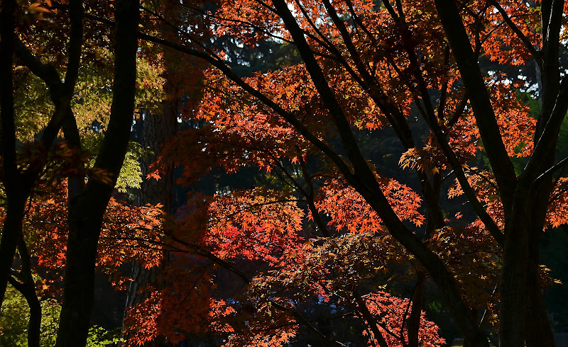 I colori dell'autunno di Wilmanna