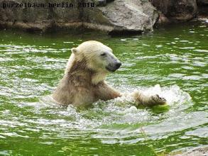 Photo: Knut hat Spass im Wasser :-)