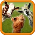 Eid Animal Transport Simulator icon