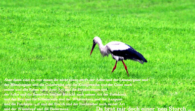 """Photo: """"'These are the birds you are to detest and not eat because they are detestable: the stork, any kind of heron, the hoopoe and the bat.""""    Das fünfte Buch Mose 14:17 (Bibel: 3/11)"""