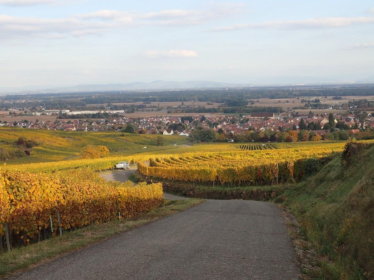 Je descends lentement vers Eguisheim