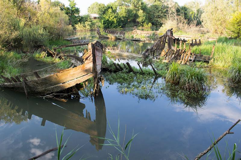 Cimitero dei burci lungo il fiume Sile di serry