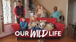 Our Wild Life thumbnail