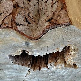 Heart by Lisa Attas - Nature Up Close Trees & Bushes