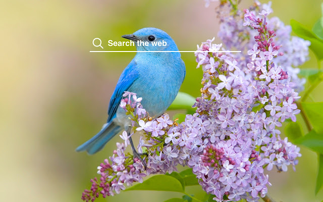 Spring Birds Hd Wallpapers Nature Theme
