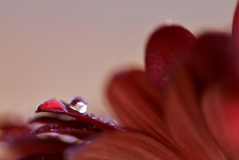 Gocce di rosso di PaMo