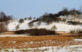 Photo: Rostocker Heide