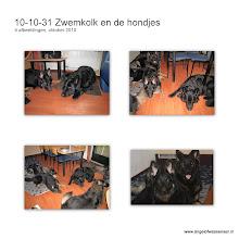 Photo: Eigenlijk is het natuurlijk te veel, zoveel honden in 1 huisje