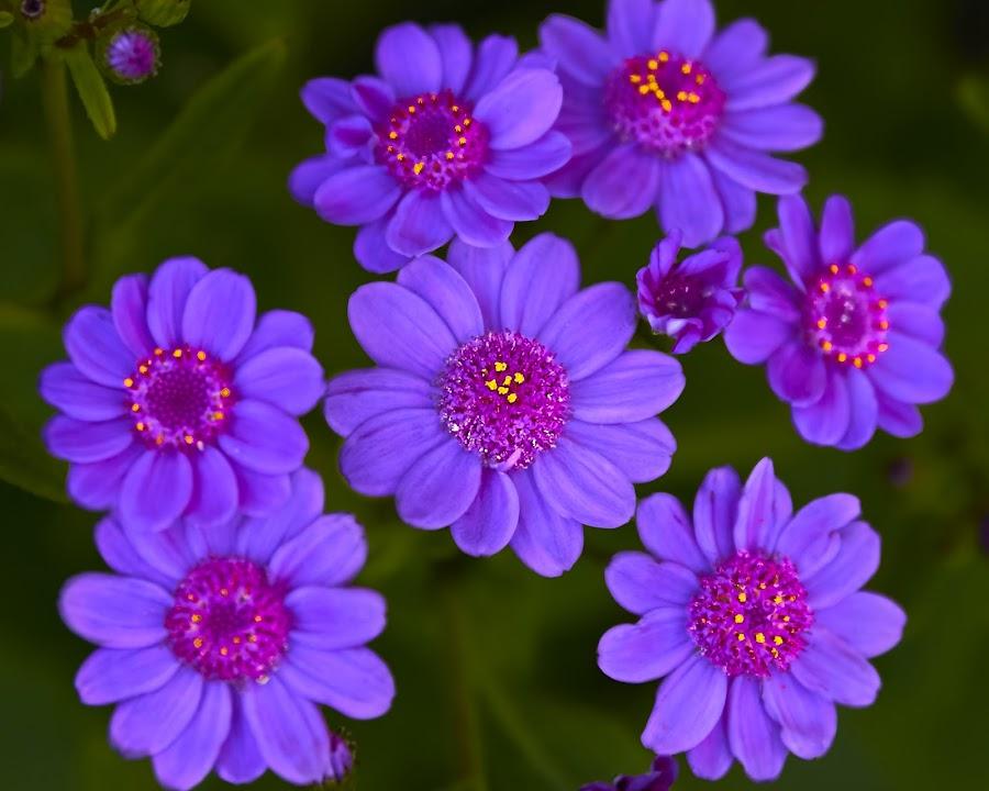 Flower 593~ by Raphael RaCcoon - Flowers Flower Gardens