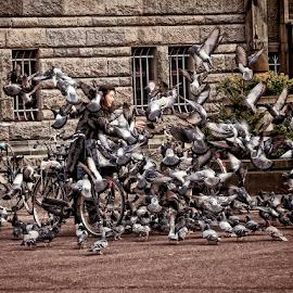 BIRD INVASION by Joanne Graham - People Street & Candids