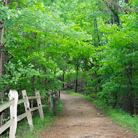 Old Road into Green Forest by Gwyn Goodrow - Landscapes Forests ( fence, single-lane, path, trees, forest, road, dirt, woods, mississippi,  )