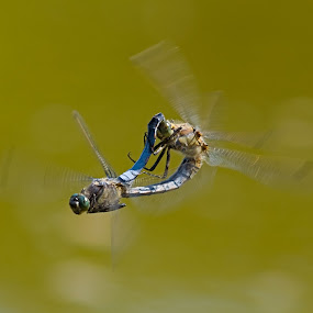 hi speed love by Anna Trandeva - Animals Insects & Spiders
