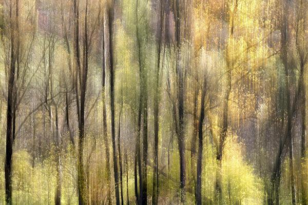 Magia d'autunno di giuliobrega