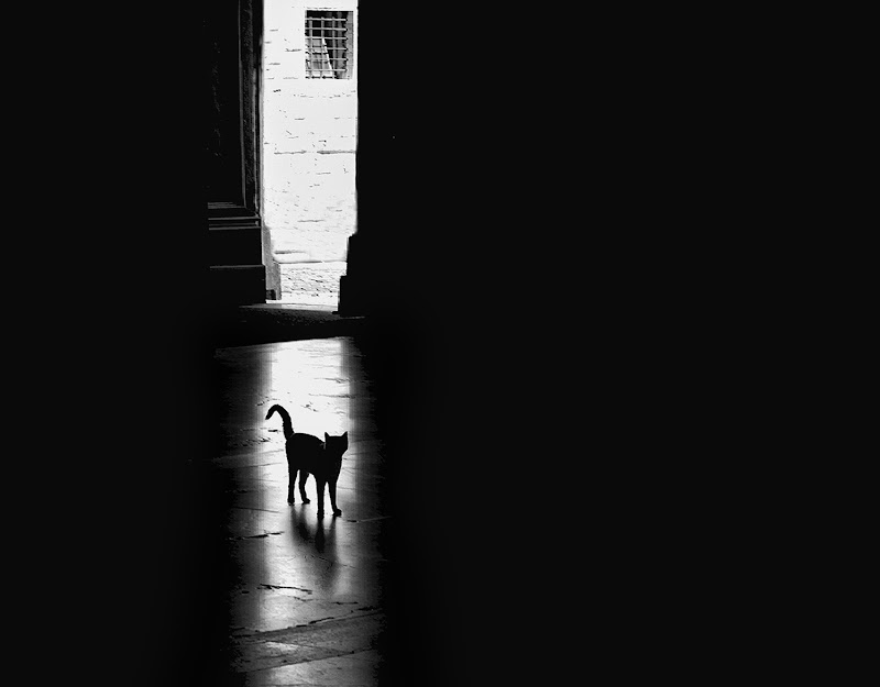The black Cat di Marlak