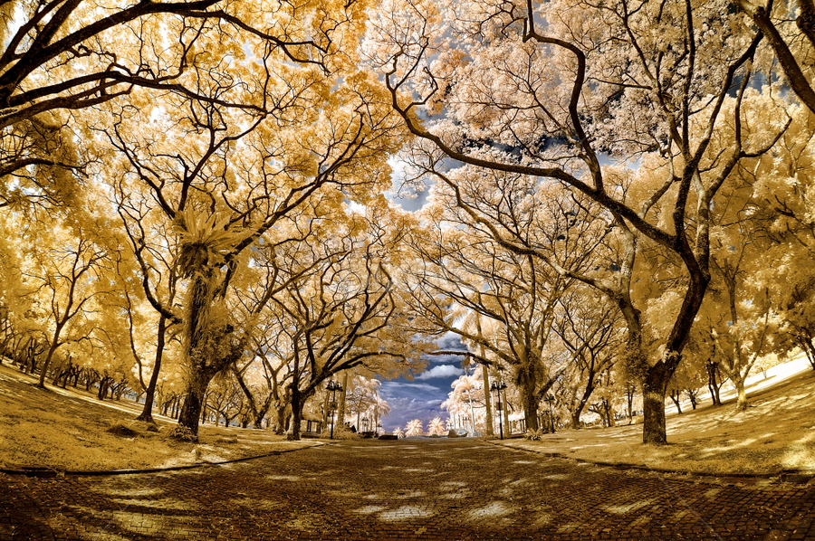 Pasir Ris Park - Infrared by Jimmy Chiau - City,  Street & Park  City Parks ( east coast, tree, infrared, city park, singapore )