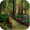 SN Nature Live Wallpapers icon