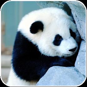 Panda Wallpaper - Best Cool Panda Wallpapers