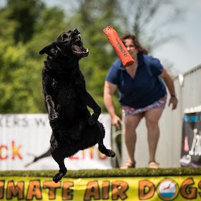 The Teeth Have It by Michelle Nolan - Animals - Dogs Running ( dog dogathlete ultimateairdogs,  )
