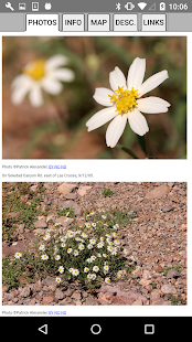 Oklahoma Wildflowers- screenshot thumbnail
