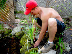 Photo: Creating planting pockets between the rocks and the liner helps the pond look more natural.