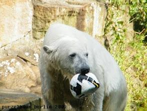 Photo: Knut hat seinen Ball wieder ;-)