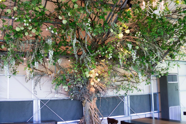 テラス内の樹木