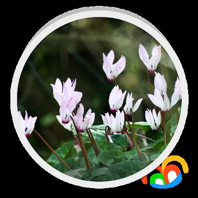 Живые цветы Live Wallpaper