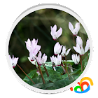 Flores Reales Live Wallpaper icon