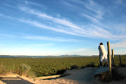 Hiker Grant Petersen admires the view on the day-trip-friendly 1km Dawid Bester Trail in the West Coast National Park.