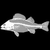 3D Fish Anatomy