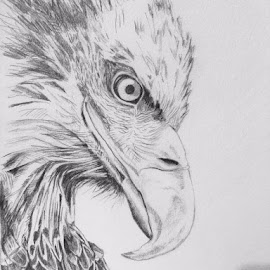Eagle by Selene Andreasen - Drawing All Drawing ( bird, sketch, eagle, nature, american eagle, art, pencil drawing, drawing )