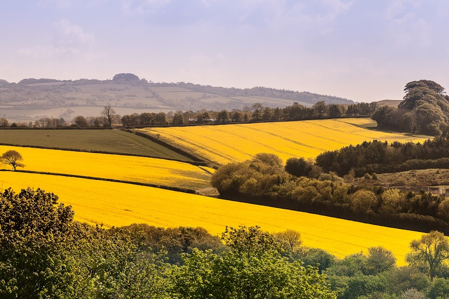 Rapeseed Against Blue Sky by Nat Parnell - Landscapes Mountains & Hills ( three things photography )