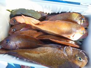 Photo: 釣果です。 イワキさんの釣果。 後半追い上げました。