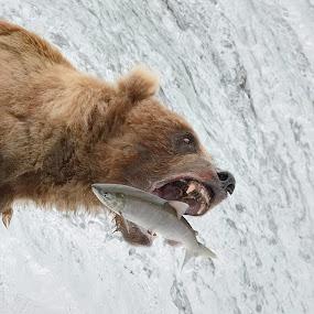 Catching Dinner by Stephen Beatty - Animals Other Mammals (  )
