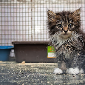Why? by Dmitriev Dmitry - Animals - Cats Kittens ( child, kitten, cat, question, animal, eyes )