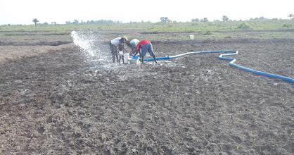 Photo: Preparation de la  parcelle SRI à Dogba Benin [2012, photo provided by Pascal Gbenou]