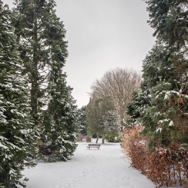 Heavitree Park, Exeter by Wendy Richards - City,  Street & Park  City Parks ( heavitree, park, snow, trees, exeter,  )