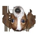 DownloadFrankerFaceZ Extension
