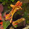 Epiphytic Flower