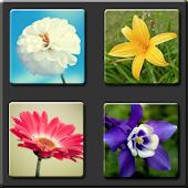 Flower Teach Zone