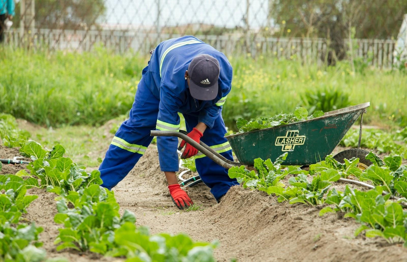 Regulação dos pesticidas é pauta importante para o agronegócio