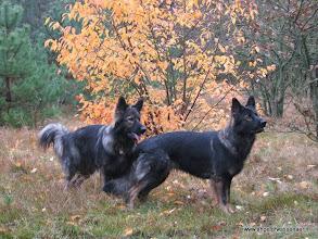 Photo: De twee zusjes Khes en Aiki met 2 poten op 1 buik......