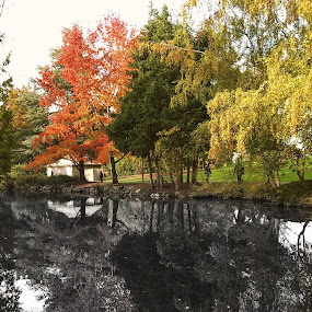 Reflection in B&W  by Emma King - Nature Up Close Trees & Bushes (  )