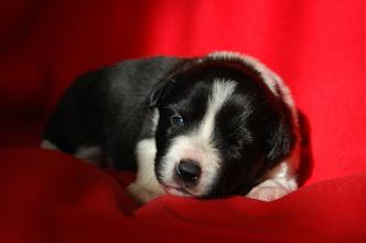 Photo: 2 weeks old