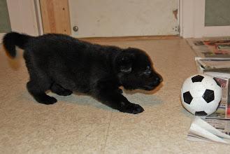 Photo: Sort jente leker med ball 24 dager gammel
